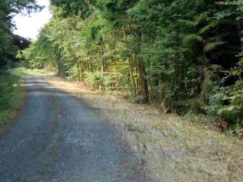 Hessen-Forst planiert Wege im Wollenberg