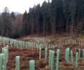 Forderung an die Regionalversammlung: Wollenberg als Vorranggebiet jetzt streichen