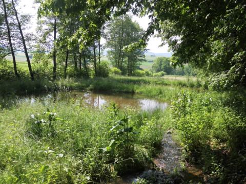 Hochwasser und industrielle Forstwirtschaft