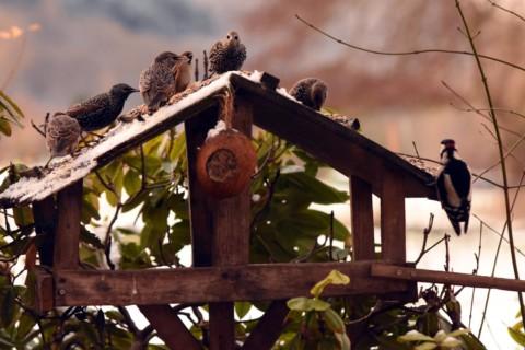 Erste Ergebnisse: Vogelzählungen im Bereich Wollenberg